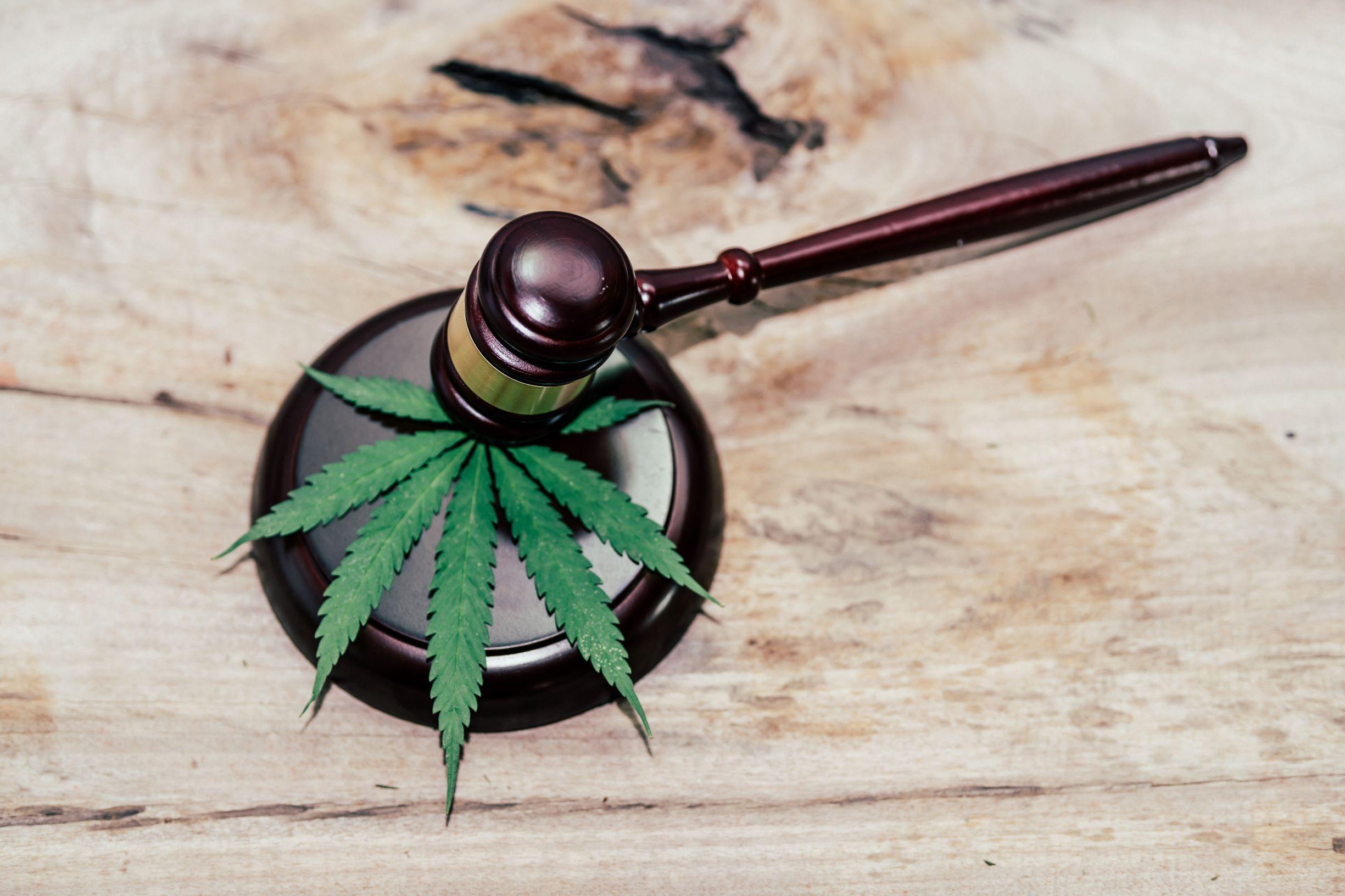 cannabis leaf under gavel